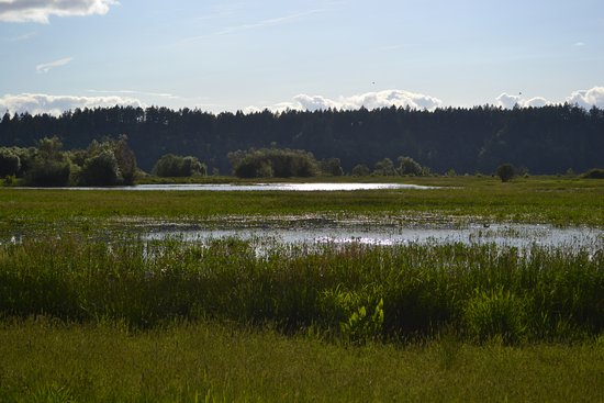 Nisqually National Wildlife Refuge: Just one of the many places to enjoy