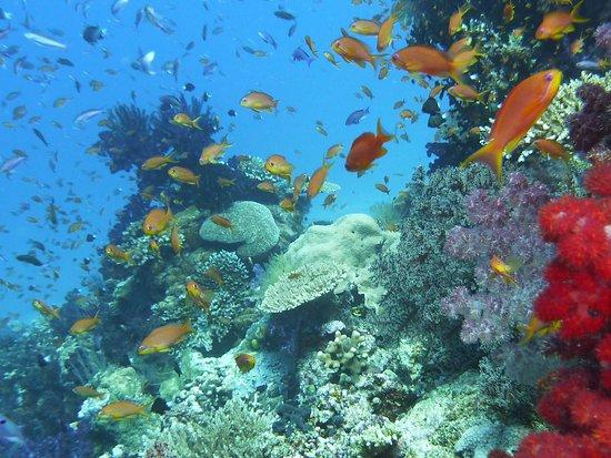 Taveuni Palms Resort: Snorkel Excursion