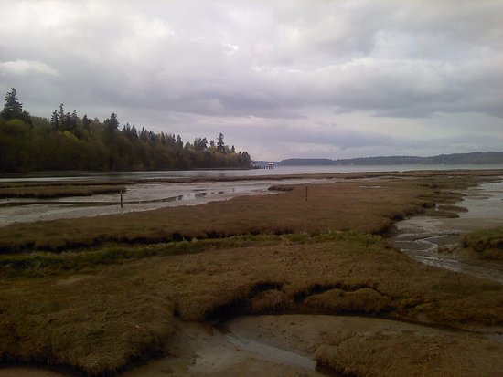 Nisqually National Wildlife Refuge: The end of the bridge as the tide was out
