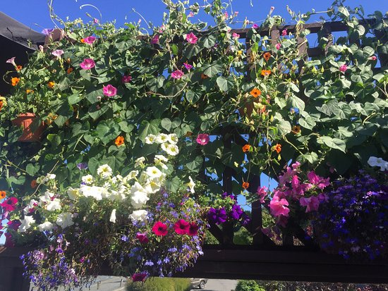 Climbing flowers and pots adorning the outside patio, The Shady Rest Waterfront, Qualicum Beach,