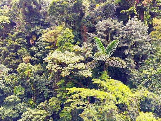 Costa Rica Sky Adventures - Arenal Park: photo5.jpg