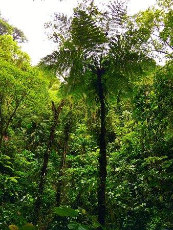 Costa Rica Sky Adventures - Arenal Park: photo8.jpg