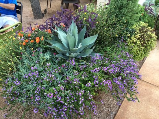 Press Cafe: Beautiful Native Plants To Accent The Patio