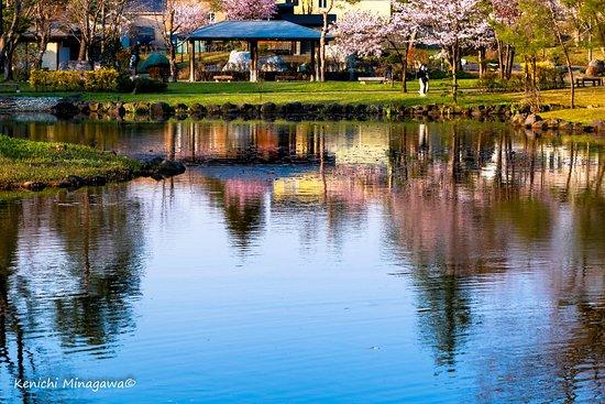 Iwamizawa, Japón: 桜の映り込みにうっとりです。