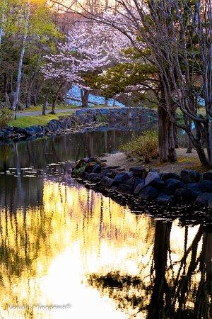 Iwamizawa, Japón: 桜も夕日に映えます。
