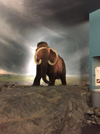 Royal BC Museum : photo1.jpg