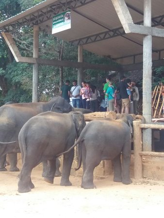 Pinnawala, Sri Lanka: 20160822_094954_large.jpg