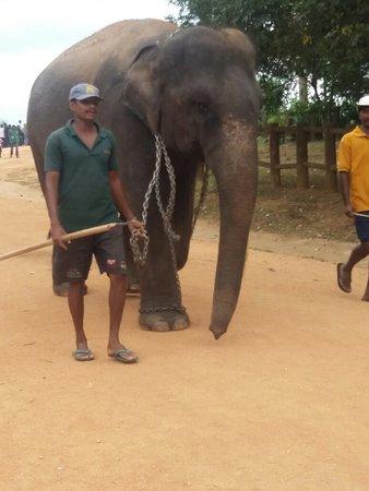 Pinnawala, Sri Lanka: 20160822_095021_large.jpg