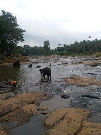 Pinnawala, Sri Lanka: 20160822_100518_large.jpg