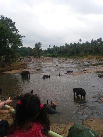 Pinnawala, Sri Lanka: 20160822_100638_large.jpg