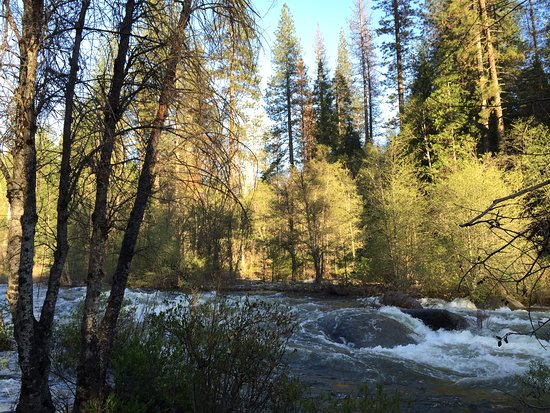 Wawona Campground: View from site 52