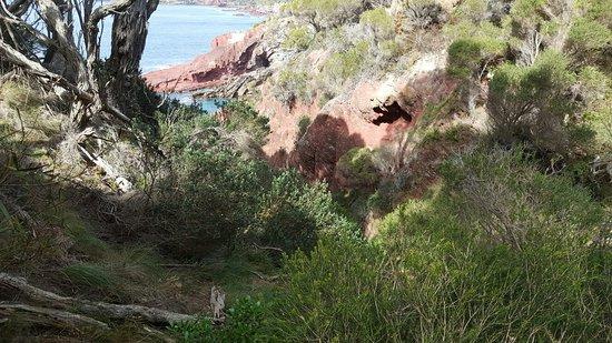 Eden, Australia: 20160823_113429_large.jpg