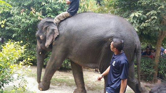 Pahang, Malaysia: Kuala Gandah Elephant Sanctuary