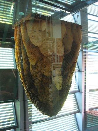 Orta Pireneler, Fransa: les abeilles