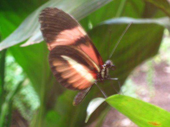 ميدي بيرينيه, فرنسا: papillon