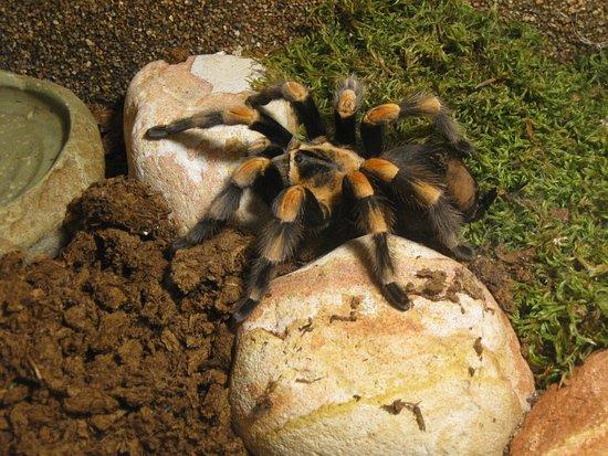 ميدي بيرينيه, فرنسا: araignée