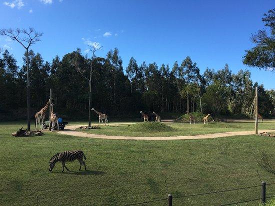 Australia Zoo: photo0.jpg