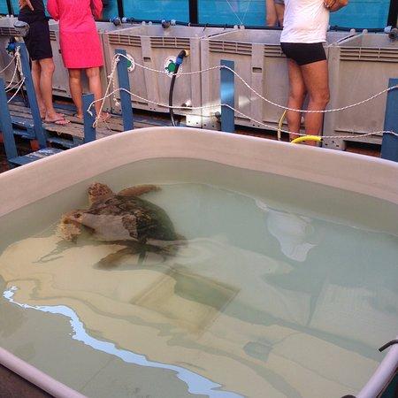 Una delle vasche piu grandi e la tartaruga in cura foto for Tartarughe grandi