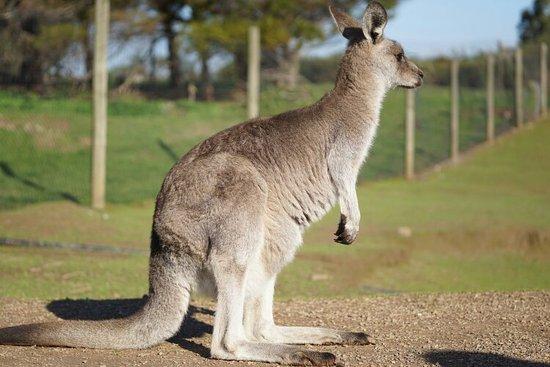 Каус, Австралия: DSC02173_large.jpg
