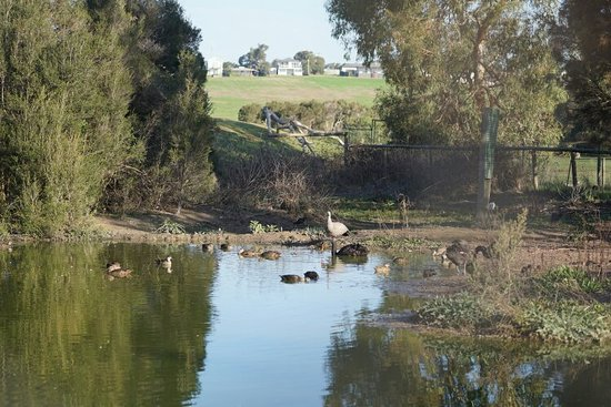 Каус, Австралия: DSC02225_large.jpg