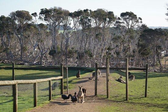 Каус, Австралия: DSC02220_large.jpg