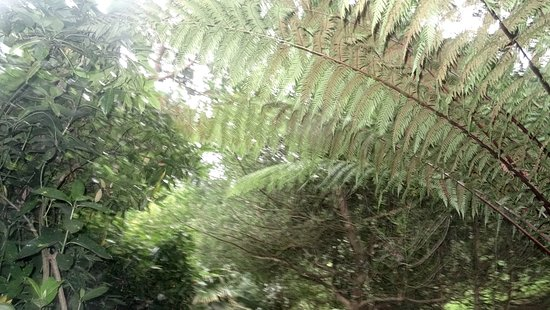 St Austell, UK: The jungle area canopy