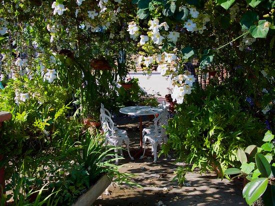 Jardin suspendu picture of casa jardin santiago de cuba for Casa jardin culebra
