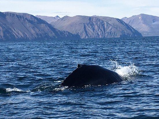 Husavik, Island: photo0.jpg