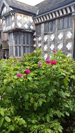 Salford, UK: Roses and windows
