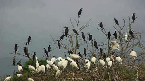 Tangalle, Sri Lanka: Wasgamuwa national park