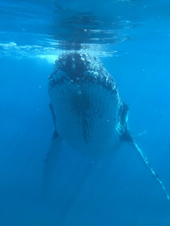 Urangan, Australien: Humpback from the underwater viewing window.