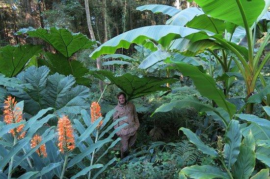 jardin jungle karlostachys, Eu, Normandie