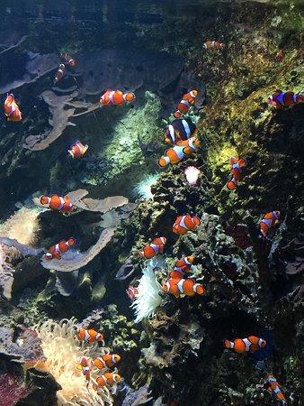 Pays de la Loire, France : Un aperçu de l'océarium du Croisic