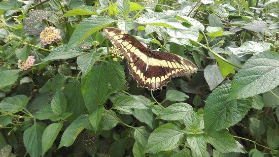 La Gueriniere, Prancis: L'Ile aux Papillons