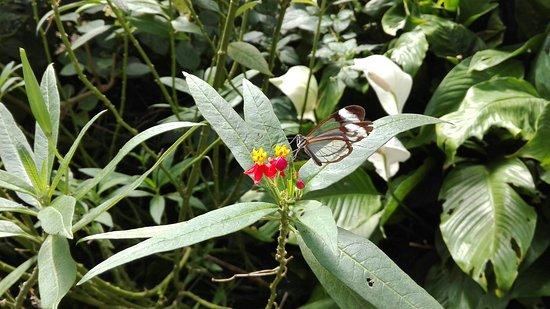La Gueriniere, Francja: L'Ile aux Papillons