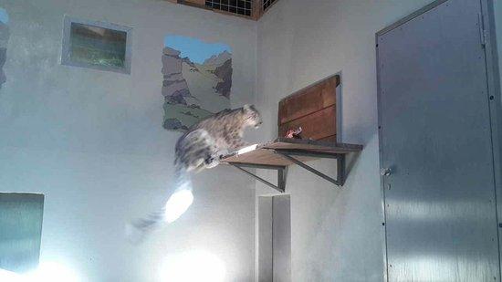 Servion, سويسرا: Zoo de Servion