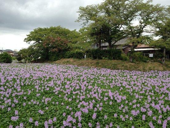 Kashihara Foto