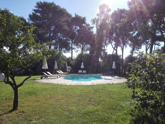 Masseria San Domenico Oria B&B: La bella piscina nella tranquilla pineta