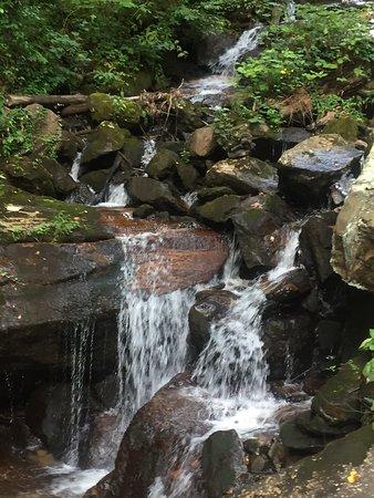 Amicalola Falls State Park: photo7.jpg
