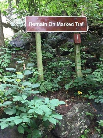 Amicalola Falls State Park: photo8.jpg