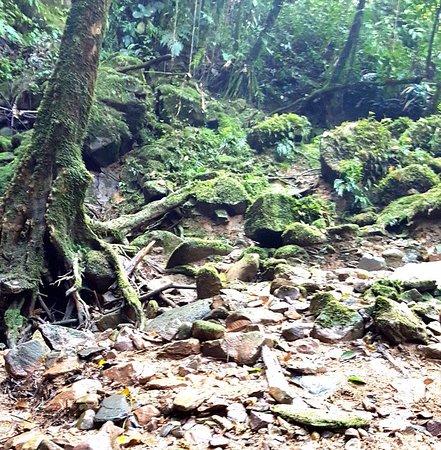 Cotundo, Эквадор: en las caminatas