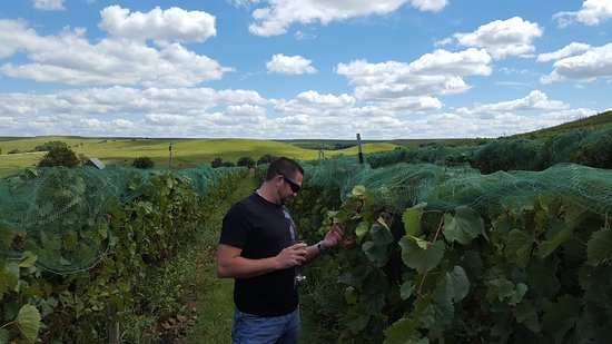 Paxico, KS: In the vineyard