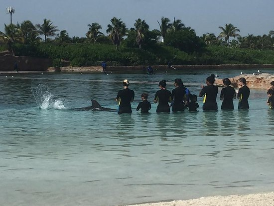 Atlantis, Royal Towers, Autograph Collection: Dolphin Cay experience was amazing!!