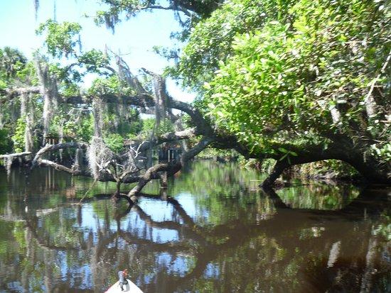 Port Orange, FL: Cracker Creek