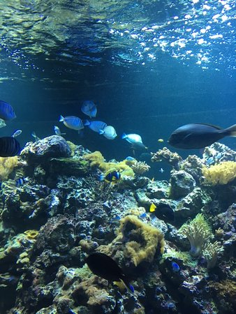 Sea Turtle Picture Of Virginia Aquarium Marine Science