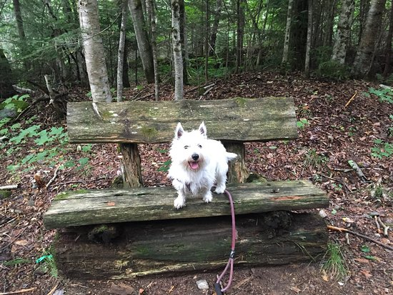 Brewster Peninsula Nature Trails: Rustic Bench on Trail