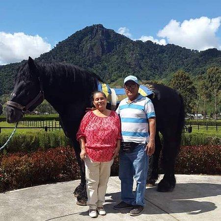 Hotel Bambito Resort : Tambien hay caballos de cuido.