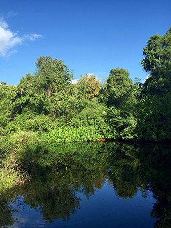 Palm Harbor, Флорида: photo2.jpg