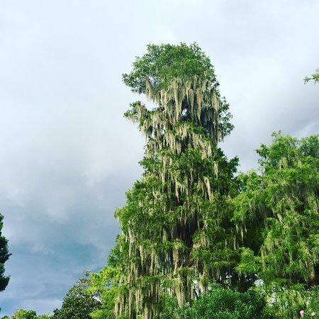 Palm Harbor, Флорида: photo5.jpg