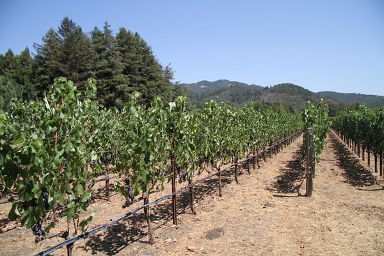Kenwood, CA: Vineyard